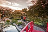 NHC Arboretum's Japanese garden