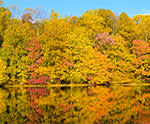 fall foliage - Burke Lake