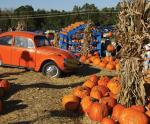 Cox Farms - Fall Festival
