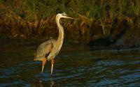 Migratory bird on Texas Gulf Coast