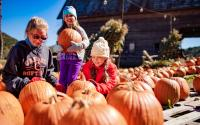 In the Pumpkin Patch at Harvest Farm