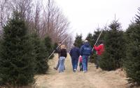 Christmas Tree Hunting is Fun for the Whole Family | Boone, NC