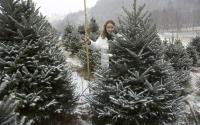 Tree Hunting is Fun in the Snow | Boone, NC