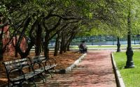 Park Bench with trees