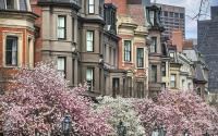 Boston Blooms - Commonwealth Avenue