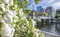 Public Garden Blooms & Bridge