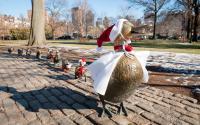 Ducklings in Winter
