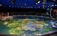 Giant Ocean Tank at the New England Aquarium