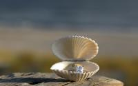 nc-beach-wedding-details-ring