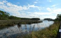 Marsh in Gautier