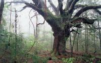 Log Town Oak