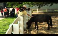 LexTreks: Kentucky Horse Park-Kids Barn