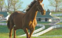 Lexington's Darby Dan Horse Farm