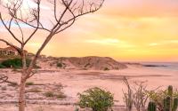 Desert-gallery