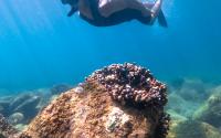 Snorkeling-1-gallery