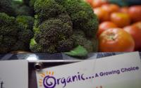 Catskill Mountain Foundation-Fresh Havest Cafe and Market-All Organic