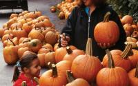 Pumpkins at a farm stand along Route 32 in Ulster County
