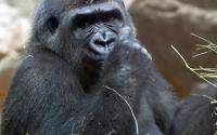 Buffalo Zoo 1099
