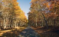 Connetquot River State Park Preserve 1433
