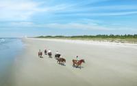 Inlet point horses still010 v lo res 450