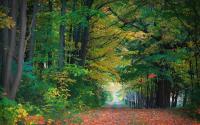 Trail Through Fall Trees