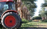 Bard Valley Date Producers Date Grove in Yuma, Arizona
