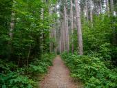 5 Ways To Enjoy Cumming Nature Center This Summer