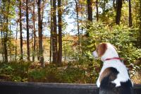 A dog looking away from the camera towards trees in a forest