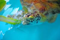 Sea-Turtle-Inc-South-Padre-940x626