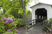 Centennial Bridge with Blooms, Cottage Grove