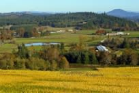 Sarver Winery View by Rick Obst