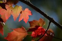 Fall Foliage by Colin Morton