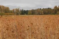 Elijah Bristow State Park in Autumn