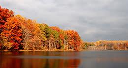Burke Lake - fall