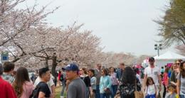 Tidal Basin Welcom Area - Cherry Blossom Festival