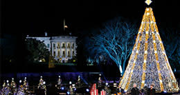 National Christmas Tree - DC Holiday Traditions