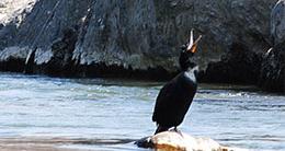 Great Falls: Birding