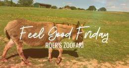 Video Thumbnail - youtube - Feel Good Fridays: Roer's Zoofari