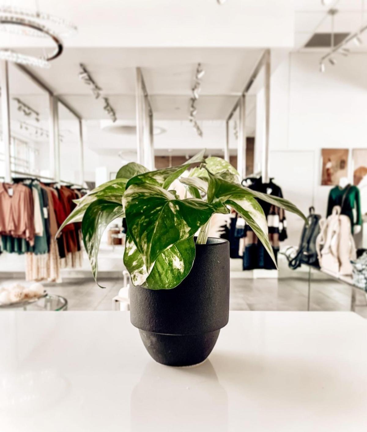Plant sitting on the counter with clothing racks in the background at OMONI Boutique in Bay City.