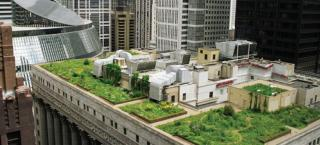City Hall green roof