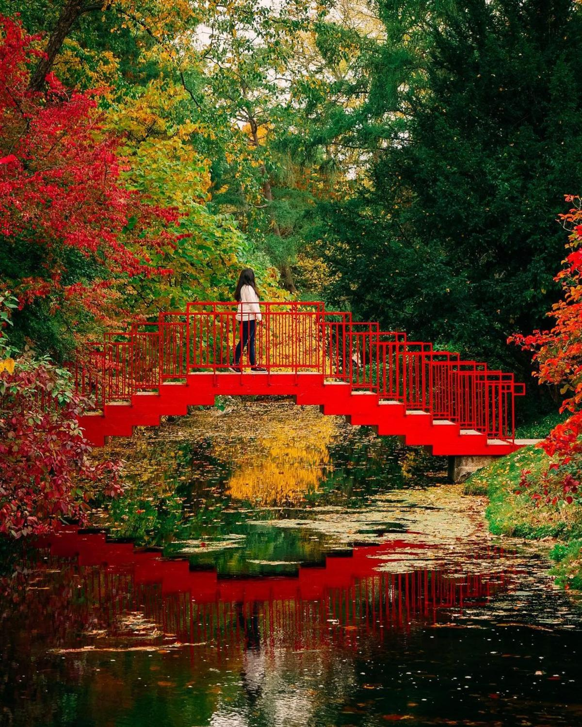 Woman walking over the Red Bridge with it reflecting on the water at Dow Gardens in Midland