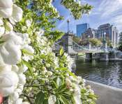 #BostonBlooms: Boston Public Garden