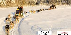 Dogsledding puzzle