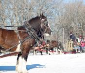 Wagon Rides, Festival du Voyageur