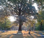 Woodland Cemetery & Arboretum 1