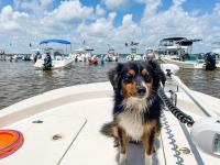 dog on a boat at shell island in Panama City Beach