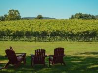 Adirondack chairs facing a vineyard
