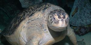 new england aquarium turtle