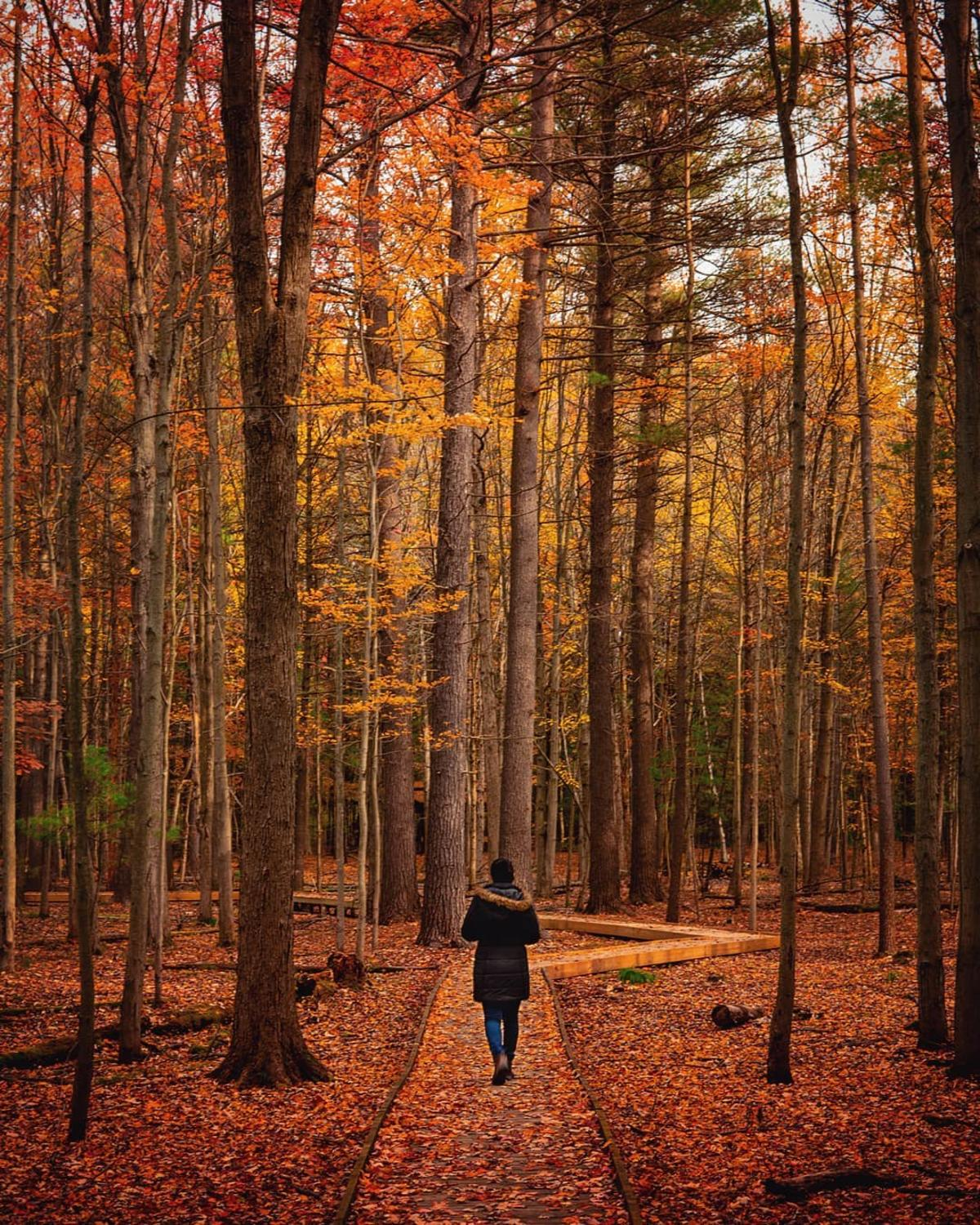 Woman walking on a fall leaf-covered trail at Whiting Forest of Dow Gardens in Midland