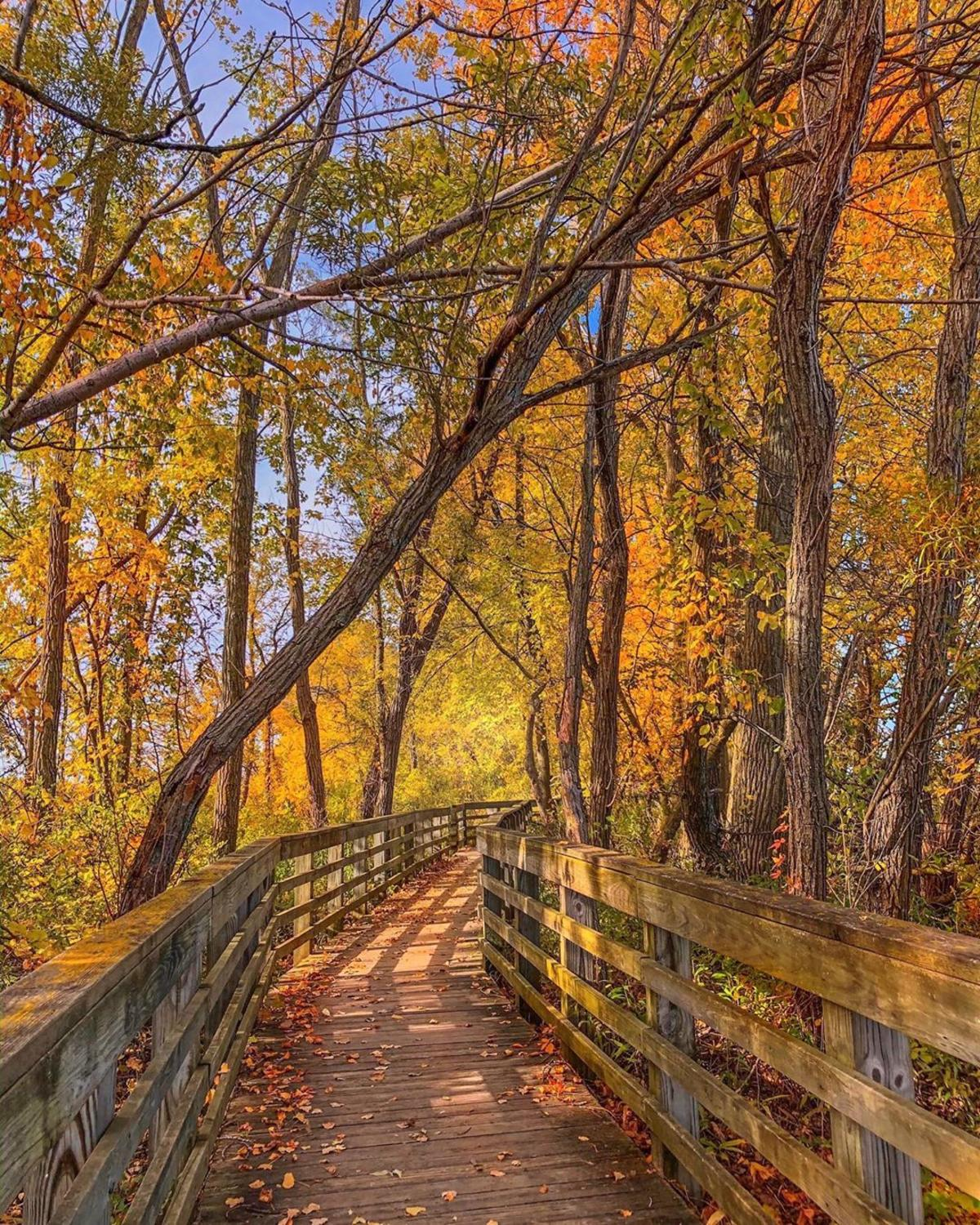 Fall-colored trees over a boardwalk trail at Bay City State Park in Bay City